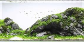 Felswand - Flowgrow Aquascape/Aquarien-Datenbank