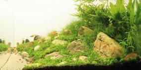Fields of gold - Flowgrow Aquascape/Aquarien-Datenbank