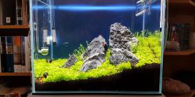 Fire Aqua 25l - 'Cracked' - Flowgrow Aquascape/Aquarien-Datenbank