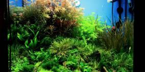 First Scaping Tryout - Flowgrow Aquascape/Aquarien-Datenbank