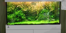First step - Flowgrow Aquascape/Aquarien-Datenbank