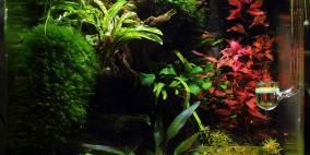 Foreverest - Flowgrow Aquascape/Aquarien-Datenbank