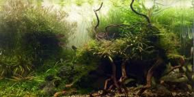 Forgotten Shadows - Flowgrow Aquascape/Aquarien-Datenbank