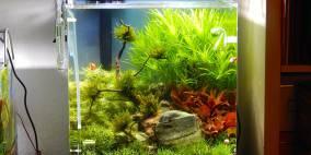 Forgotten Word - 60 Dennerle Cube - Flowgrow Aquascape/Aquarien-Datenbank