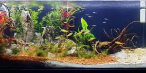 Freedom Bay - Flowgrow Aquascape/Aquarien-Datenbank