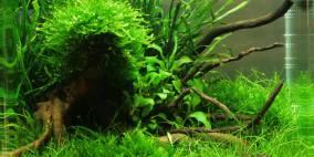 From a Distance - Flowgrow Aquascape/Aquarien-Datenbank