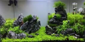 Garden Valley - Flowgrow Aquascape/Aquarien-Datenbank