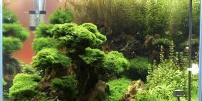Garnelen Oase - Flowgrow Aquascape/Aquarien-Datenbank