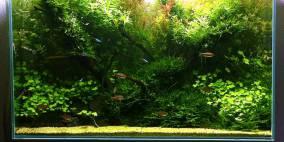 Glasgarten - Flowgrow Aquascape/Aquarien-Datenbank