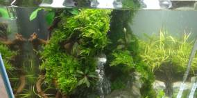 Great  Green Wall - Flowgrow Aquascape/Aquarien-Datenbank