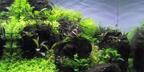 Green between - Flowgrow Aquascape/Aquarien-Datenbank