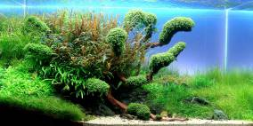 - Green Breath - - Flowgrow Aquascape/Aquarien-Datenbank