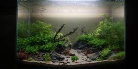 Green Hornet - Flowgrow Aquascape/Aquarien-Datenbank
