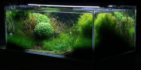 green&red - Flowgrow Aquascape/Aquarien-Datenbank
