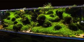 Green Sisters - Flowgrow Aquascape/Aquarien-Datenbank