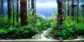 Green Theory - Flowgrow Aquascape/Aquarien-Datenbank