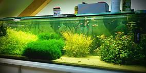 Green way - Flowgrow Aquascape/Aquarien-Datenbank