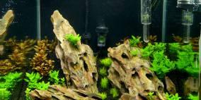Grüne Drachenhöhlen - Flowgrow Aquascape/Aquarien-Datenbank
