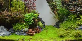 Grüne Mitte - Flowgrow Aquascape/Aquarien-Datenbank