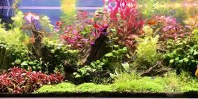 Hauptsache Farbe - Flowgrow Aquascape/Aquarien-Datenbank