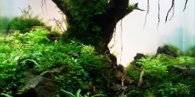 Hello old Quercus - Flowgrow Aquascape/Aquarien-Datenbank