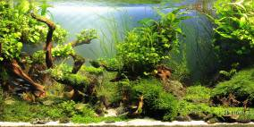 Hidden Valleys - Flowgrow Aquascape/Aquarien-Datenbank