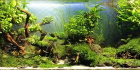 Hidden Valleys - Flowgrow Aquascape/Aquarien-Datenbank