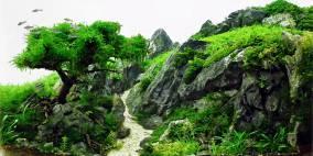 Hiking Tour - Flowgrow Aquascape/Aquarien-Datenbank