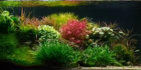 Hortus - Flowgrow Aquascape/Aquarien-Datenbank