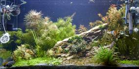 Huallaga - Flowgrow Aquascape/Aquarien-Datenbank