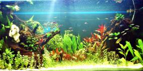 In the natural water - Flowgrow Aquascape/Aquarien-Datenbank
