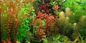 Indian summer - Flowgrow Aquascape/Aquarien-Datenbank
