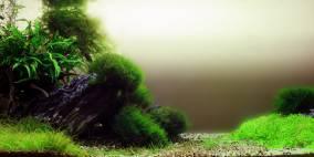 inspired by nature - Flowgrow Aquascape/Aquarien-Datenbank