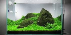 Iwagumi im GlasGarten Mini M - Flowgrow Aquascape/Aquarien-Datenbank