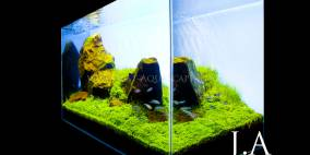 Just Add Water - Flowgrow Aquascape/Aquarien-Datenbank