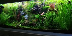Juwel Rio 240 und 2x Appendix - Flowgrow Aquascape/Aquarien-Datenbank
