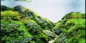 Keep on rockin! - Flowgrow Aquascape/Aquarien-Datenbank