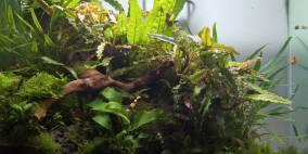 Kleiner Wurzelzwerg - Flowgrow Aquascape/Aquarien-Datenbank