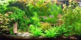 Kongamaz - Flowgrow Aquascape/Aquarien-Datenbank