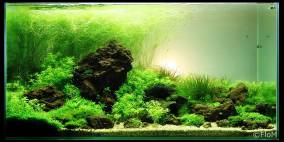 Ladigesia Mountains - Flowgrow Aquascape/Aquarien-Datenbank