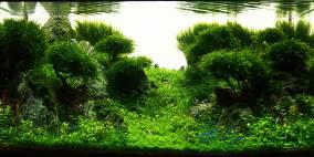 Lady Liquid - Flowgrow Aquascape/Aquarien-Datenbank