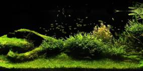 let`s go to the meadow - Flowgrow Aquascape/Aquarien-Datenbank