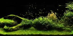 let`s go to the meadow - Flowgrow Aquascape/Aquarien-Datenbank