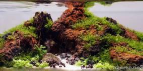 Little Big - Flowgrow Aquascape/Aquarien-Datenbank
