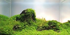 Little Green Mountain - Flowgrow Aquascape/Aquarien-Datenbank