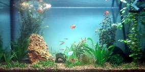 Little Maya Bay - Flowgrow Aquascape/Aquarien-Datenbank