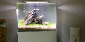 Little Stone - Flowgrow Aquascape/Aquarien-Datenbank