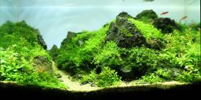 Long way to go - Flowgrow Aquascape/Aquarien-Datenbank