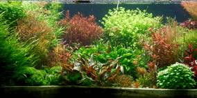 Markus' 130er - Flowgrow Aquascape/Aquarien-Datenbank