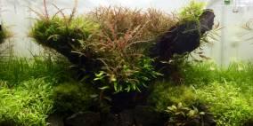 Marshy Meadow - Flowgrow Aquascape/Aquarien-Datenbank